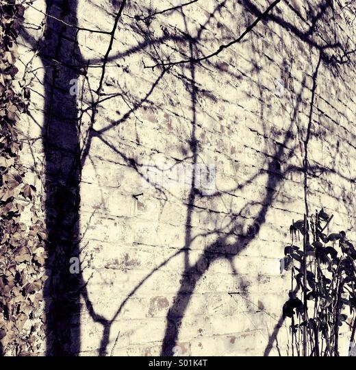 Baum Schatten auf Ziegelmauer Stockbild