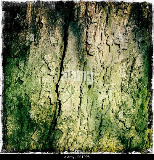 Nahaufnahme von Kastanien Baumstamm Textur angezeigt. Hipstamatic, iPhone Stockbild