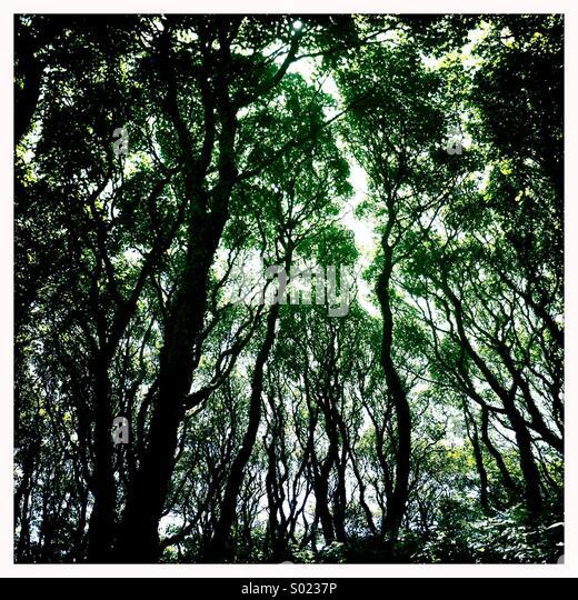 Bäume im Wald Stockbild