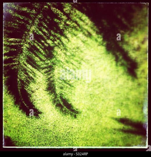 Schatten der Palme Blätter auf Rasen Stockbild