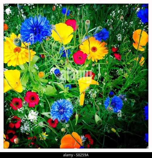 Bunte Sommerblumen Stockbild