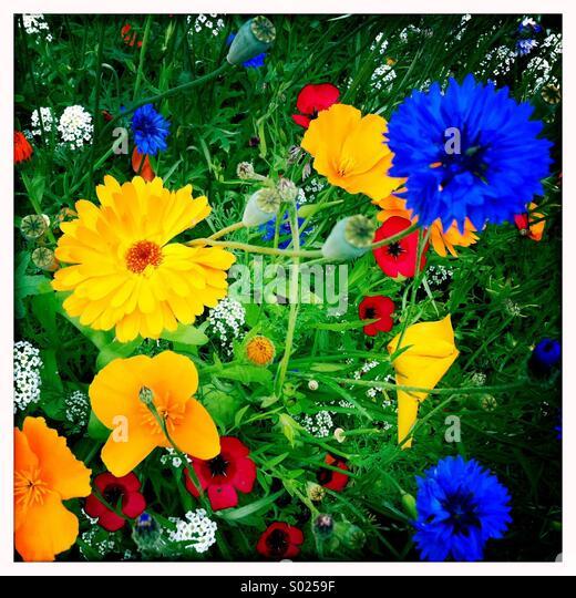 Bunte Blumen im Sommerwiese Stockbild