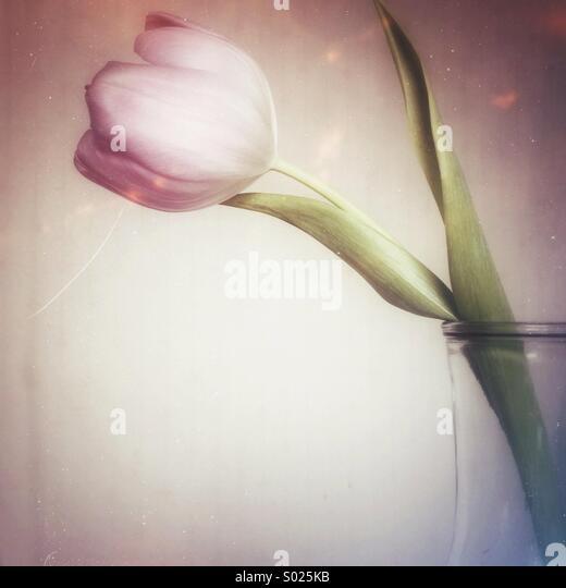 Tulpe in Glasvase Stockbild