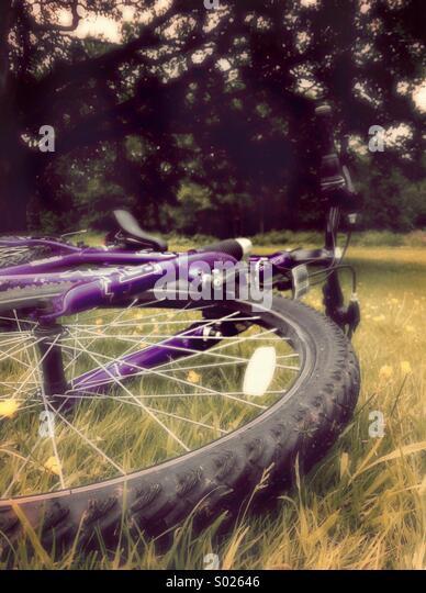 Fahrrad auf dem Rasen Stockbild