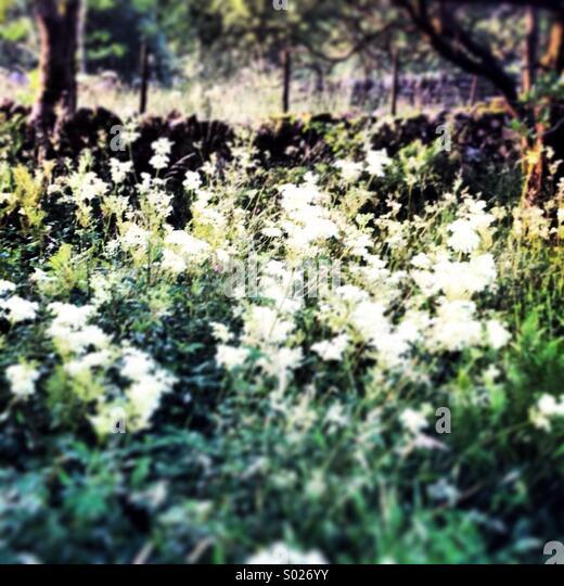 Blumen in einer Sommerwiese Stockbild