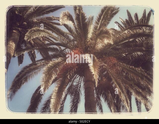 Palme in Nerja an der Costa Del Sol Stockbild