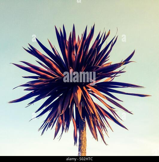 Palme Stockbild