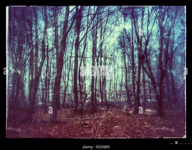 Atmosphärischen alten britischen Woodland Stockbild