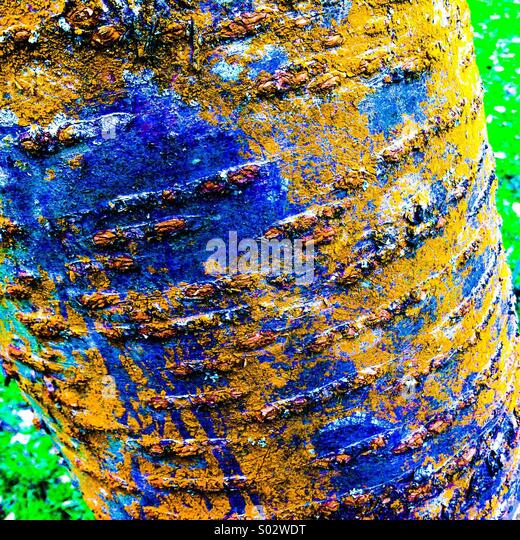 Stark farbige Rinde auf Baumstamm Stockbild