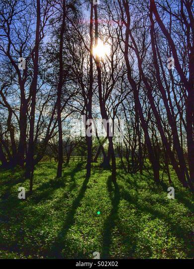 Dawn Schatten in einem alten englischen Waldgebiet Stockbild
