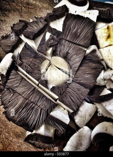 Gehackte flachen Pilz Stockbild