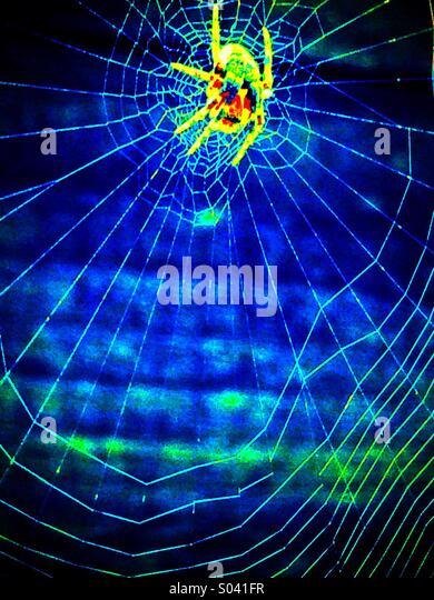 Winzigen gestreiften Spinne im Netz Stockbild