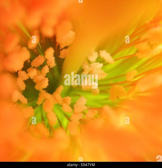 Makro aus dem Inneren des eine Kaktus-Blume Stockbild