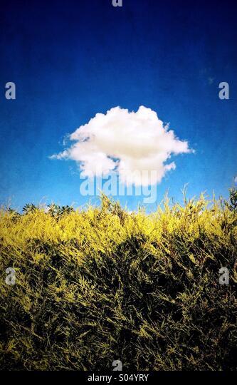 Weiße Wolke und Hecke Stockbild