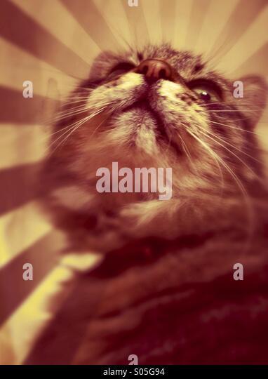 Porträt einer Katze auf der Suche nach oben Stockbild
