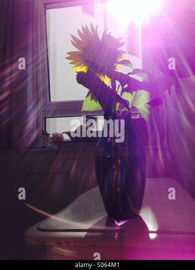 Blume Im Sonnenlicht Stockbild
