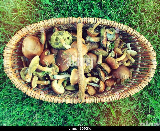 Pilze Im Korb Stockbild