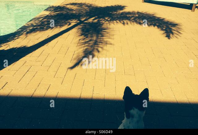 Palm Tree Reflexion Stockbild