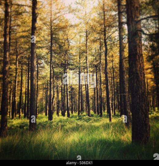 Wald in der Nähe von Tilburg, Brabant, Niederlande Stockbild