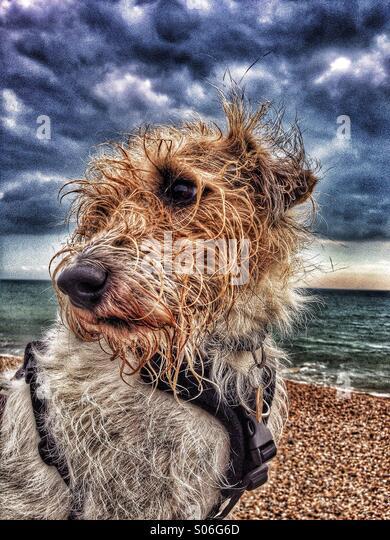 Nassen windigen Hund am Meer Stockbild