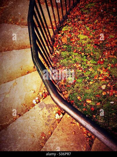 Geschwungene Stufen, Blätter Geländer und Herbst Stockbild