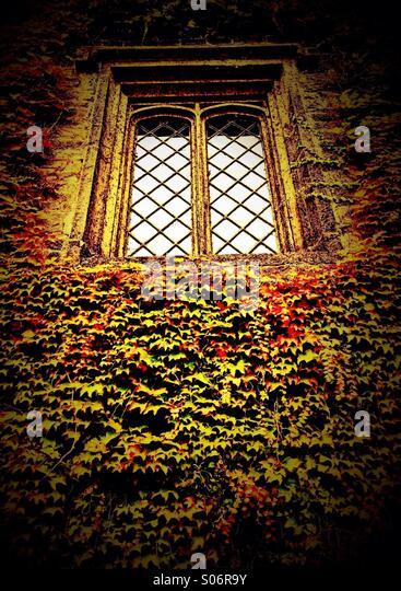 Alte Fenster umgeben von Efeu (Townely Hall, Burnley) Stockbild
