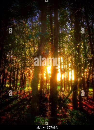Spätsommer-Sonne durch die Bäume. Stockbild