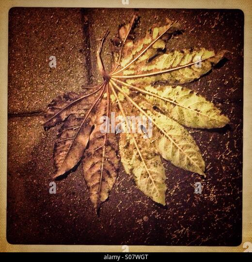 Herbst Blatt Stockbild