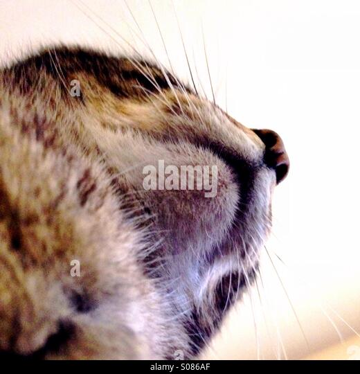 Katze Kinn Stockbild