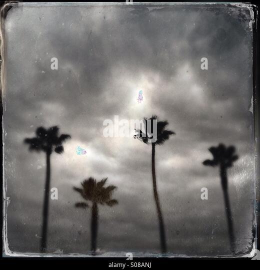 Eine abstrakte Schwarzweißfotos von Palmen. Manhattan Beach Kalifornien USA. Stockbild