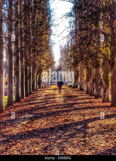 Männliche Figur hinunter eine Allee von Bäumen Stockbild