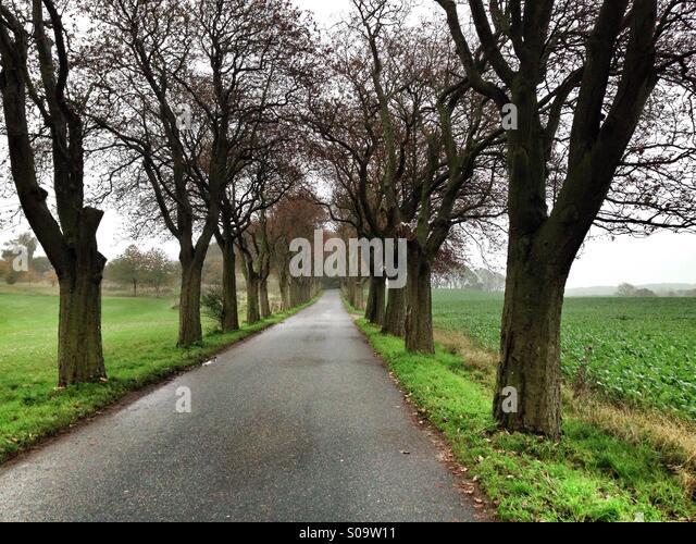 Skandinavischen Landschaften, nebligen Atmosphäre in einer abgelegenen Straße, mitten in den Feldern der Stockbild