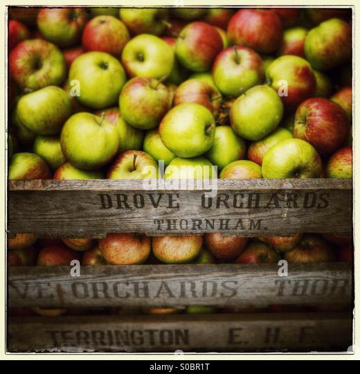 Äpfel in einer Holzkiste mit Schild fuhr Obstgärten, Dornweiler bezeichnet Stockbild