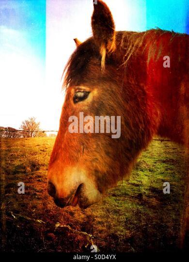 Seitenansicht eines Pferdes Stockbild