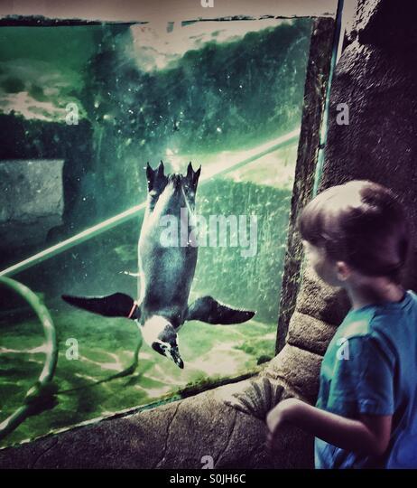 Kind beobachten Pinguin beobachtete Kind Stockbild