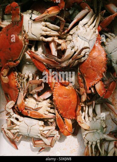 Krabben Sie-kochen. Stockbild