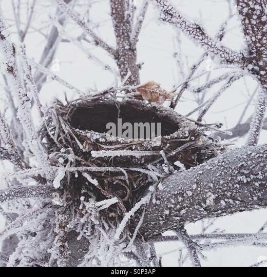 Empty Nest Stockbild