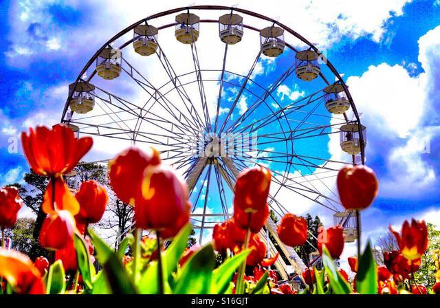 Rote Tulpen mit einem Riesenrad im Hintergrund Stockbild