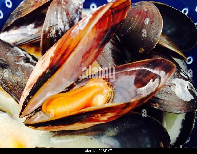 Schottische Miesmuscheln in weißen Wein-Sahne-sauce Stockbild