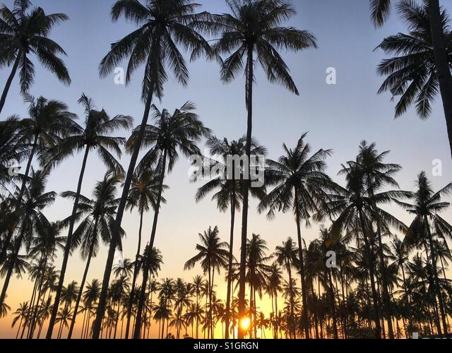 25.05.17 Lombok, Indonesien. Eine schöne Sonne versteckt die Kokosnüsse Baum in Lombok, Indonesien. Stockbild