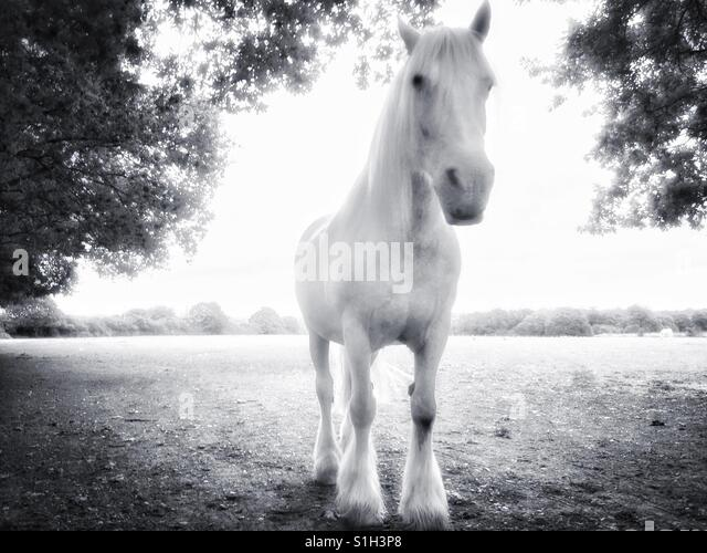 Weißes Pferd. Stockbild