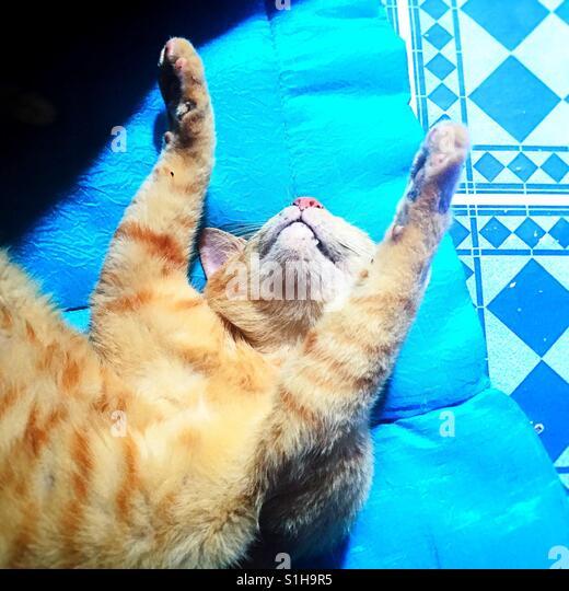 eine Katze über den Rücken Rollen Stockbild