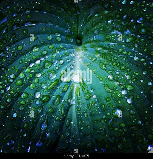 Eine Nahaufnahme der Wassertropfen auf einer tropischen Pflanze Stockbild