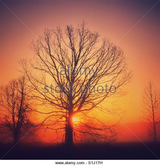 Sonnenaufgang an einem nebligen Morgen am Ende des Winters Stockbild