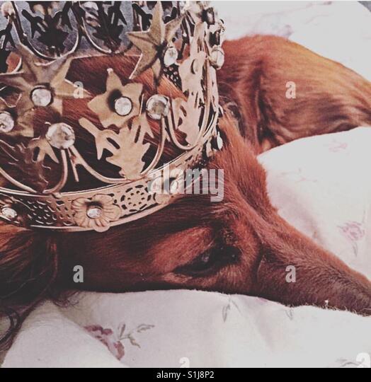 Prince Charlie von Norwegen Stockbild