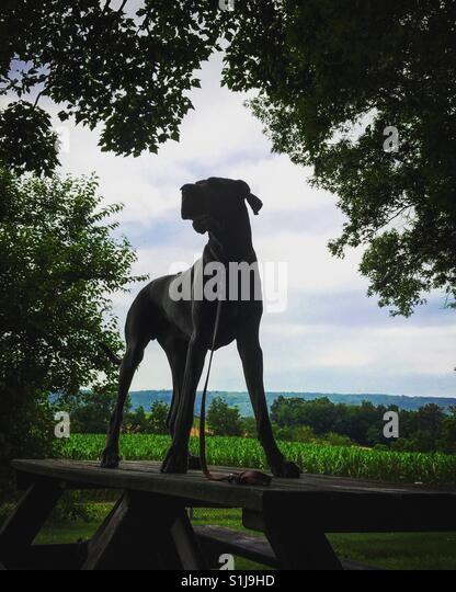 Statue-Welpe Stockbild