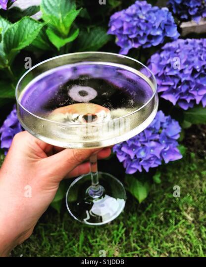 Champagner mit Hortensien Stockbild