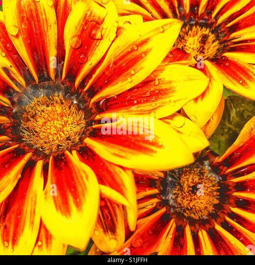Tau auf Blumen. Stockbild