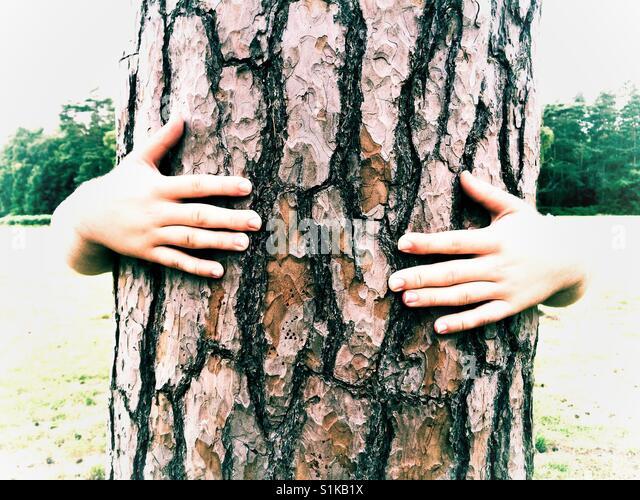 Ein paar Hände, die den Stamm von einem hohen Baum umarmen, während es streicheln, wie der Baum Hände Stockbild