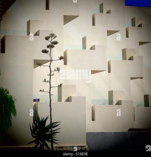 Palme im Sonnenschein mit Gebäude Stockbild